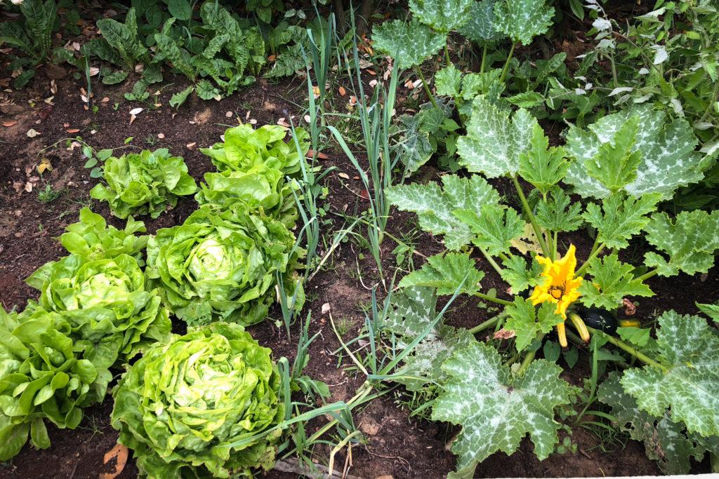 cultiver-ses-legumes