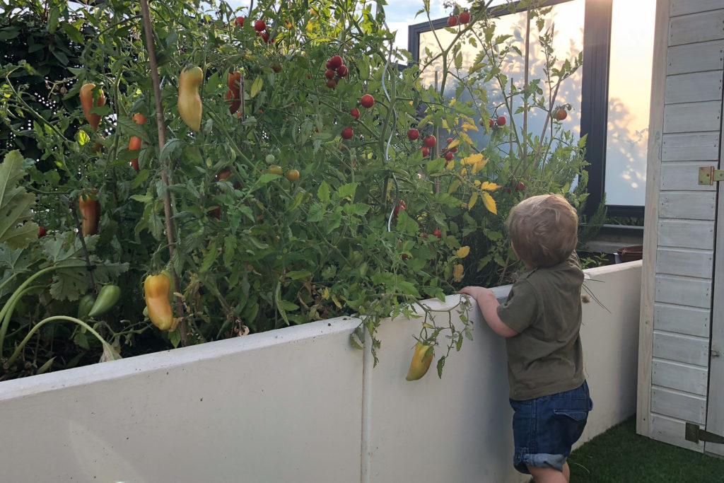 cultiver-ses-legumes-avec-enfants